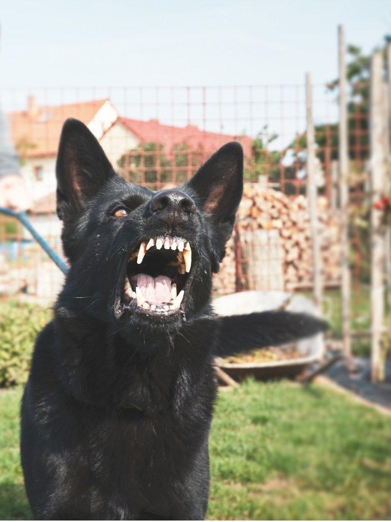 uitvallende agressieve hond