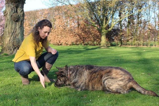 basisoefeningen aanleren reactief gedrag hond