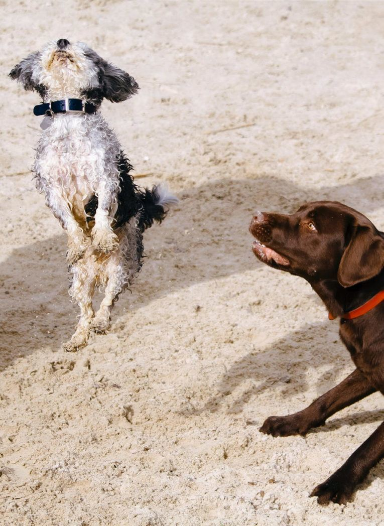 hond blaft naar andere hond