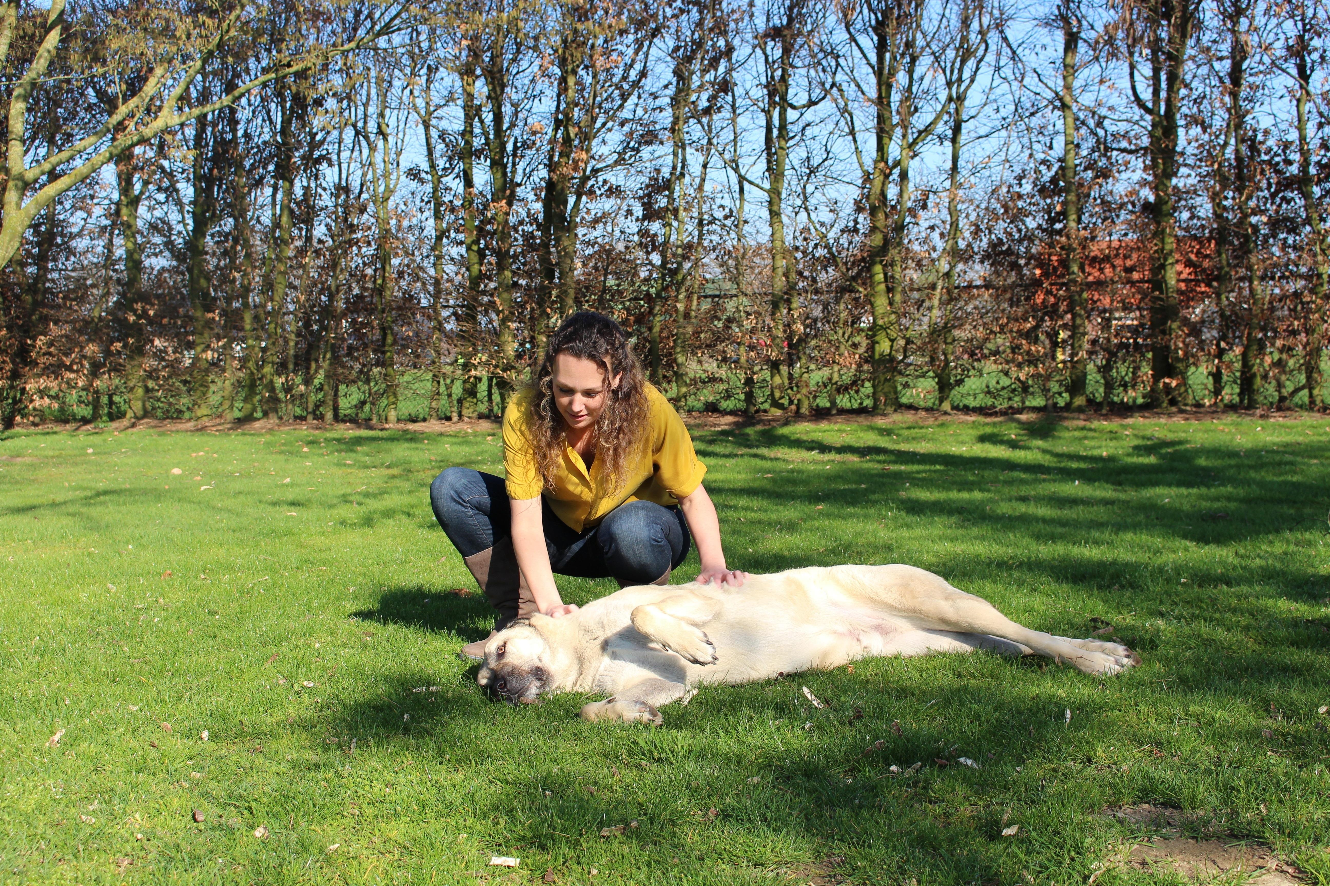 masseren hond helpt om reactief gedrag bij honden te verminderen
