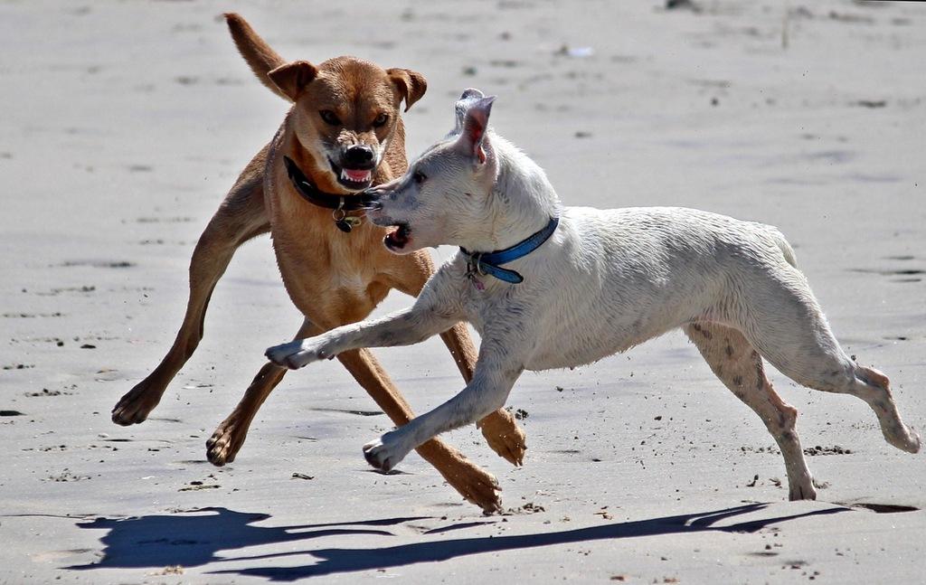 reactieve honden