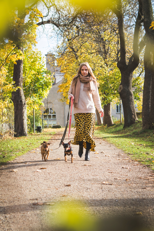 mijn hond valt uit, nu wandel ik ontspannen