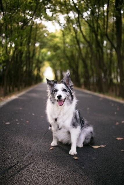 ontspannen hond