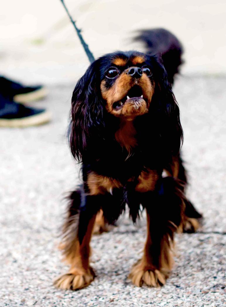 uitvallende hond
