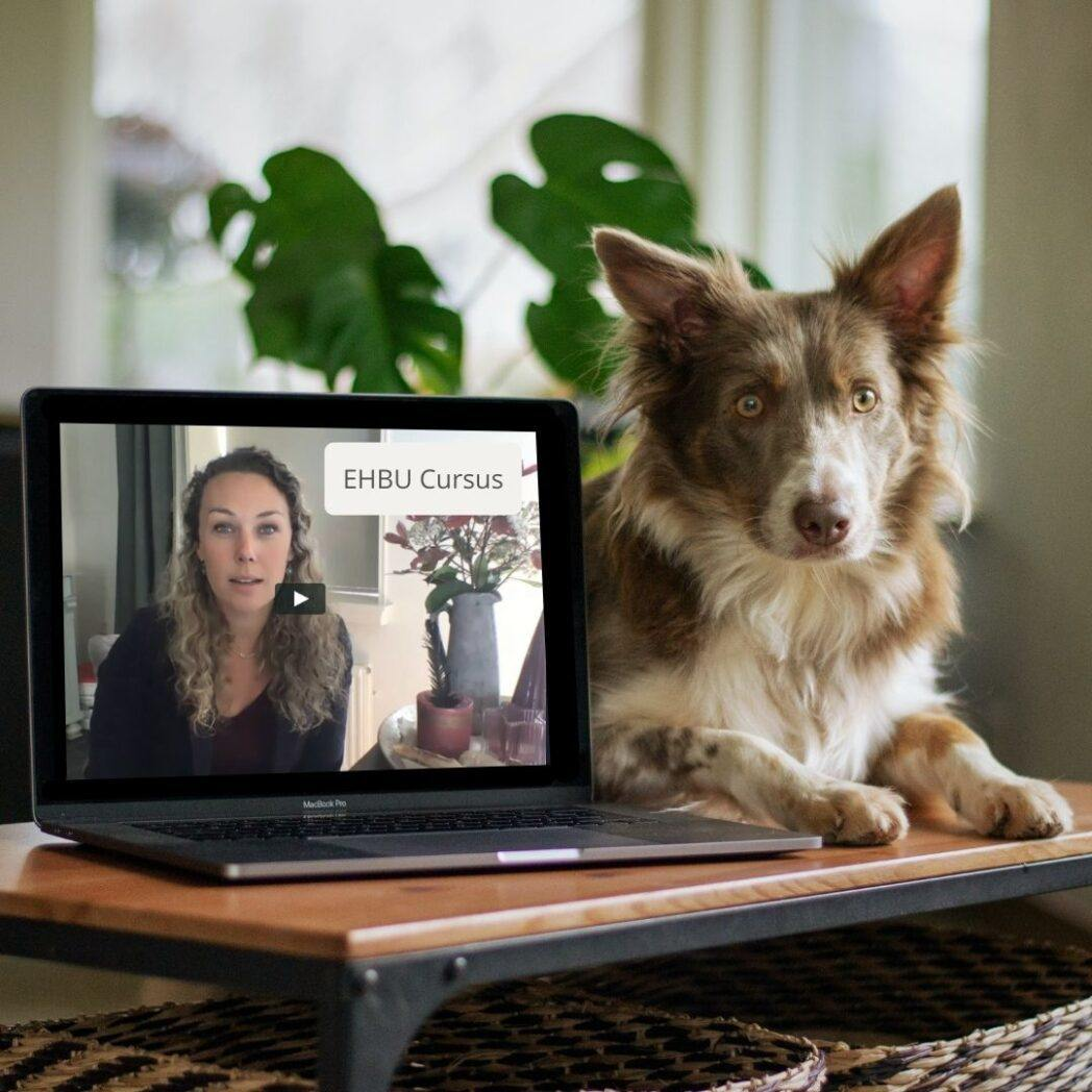 online cursus uitvallende hond
